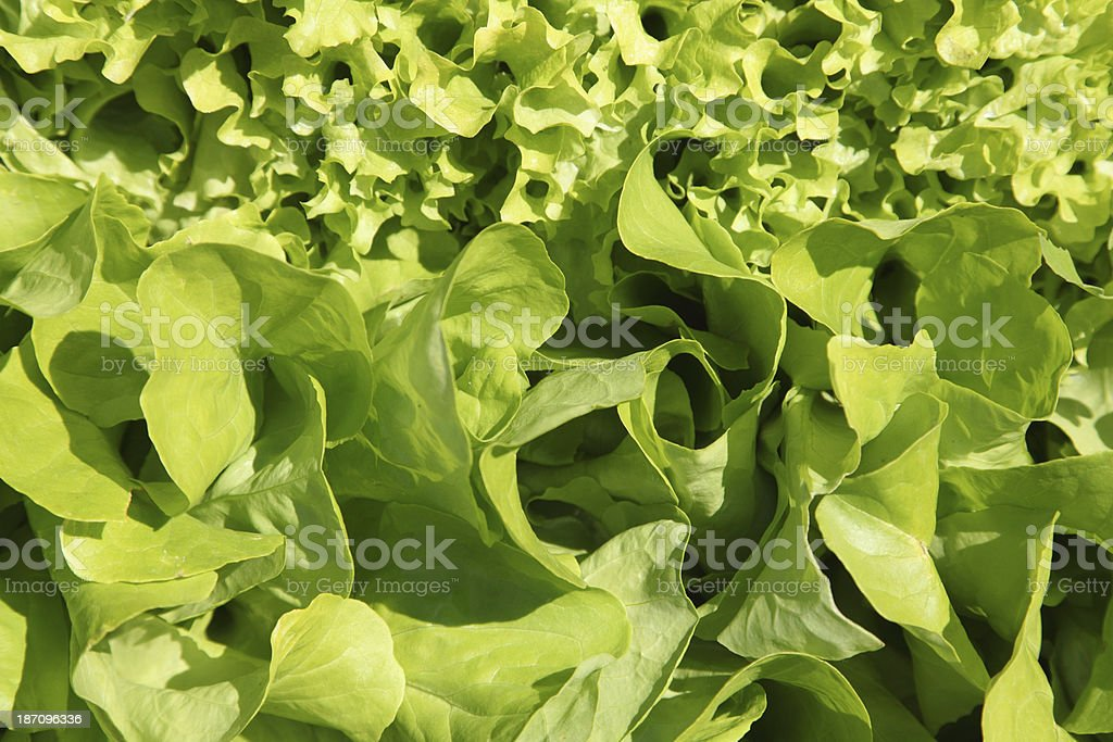 Salad on a bed royalty-free stock photo