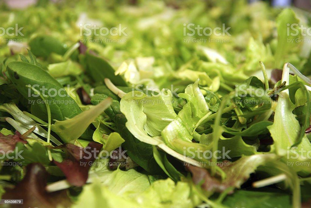 salads stock photo