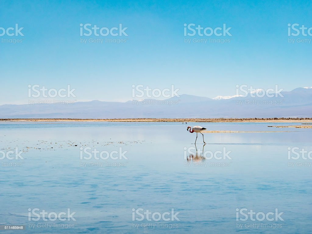 Salar de Atacama Laguna Chaxa royalty-free stock photo