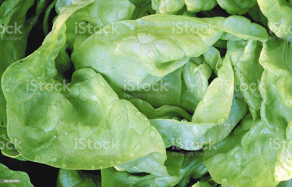 Salate 1 stock photo