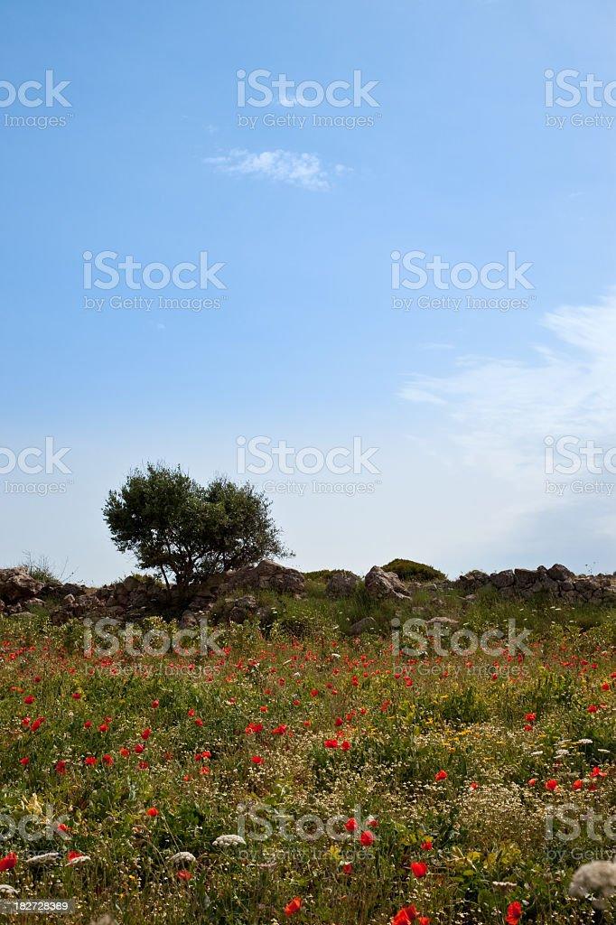 Salento Landscape royalty-free stock photo