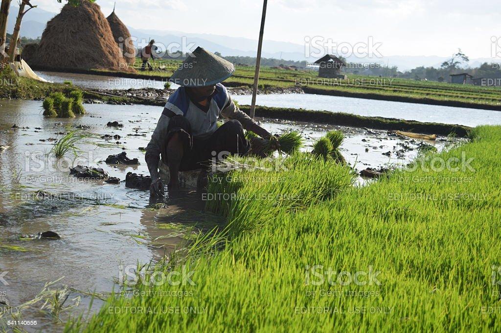 Salf farmer indonesia stock photo