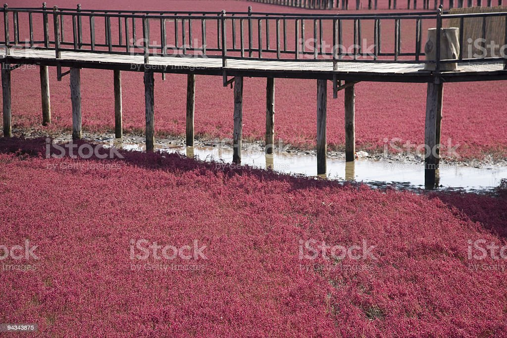 red beach stock photo