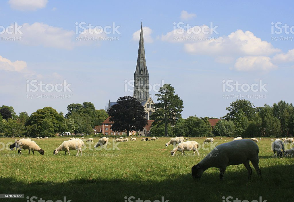 Salisbury Cathedral across the meadows stock photo