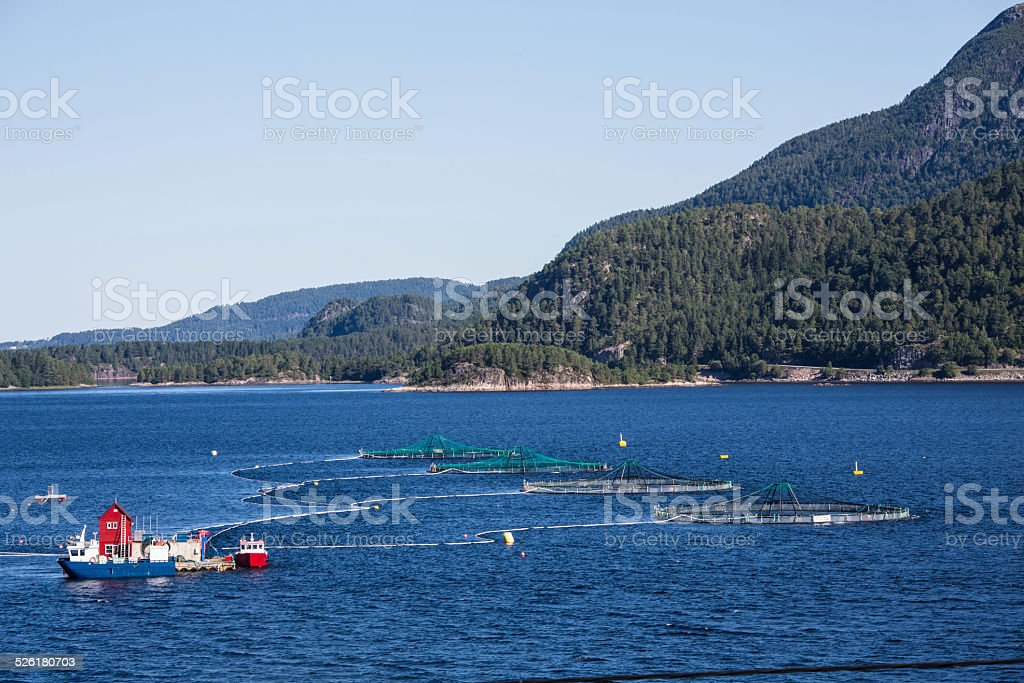 Lachsfarm in Norwegen stock photo