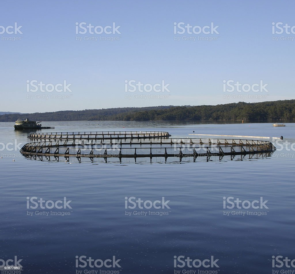 Salmon Farm Macquarie Harbour, Tasmania stock photo