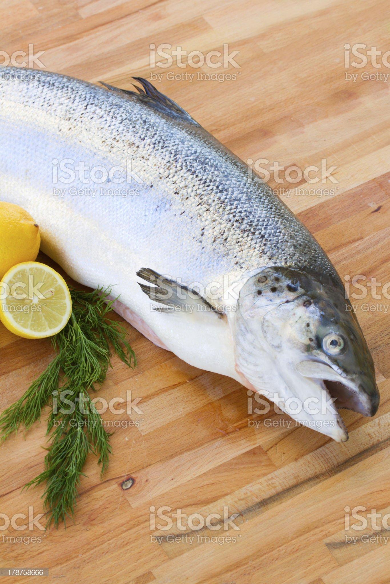 Salmon fish close up royalty-free stock photo