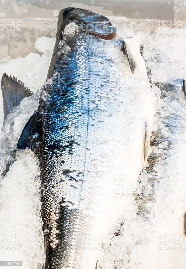 Salmon fish on ice at the market stock photo