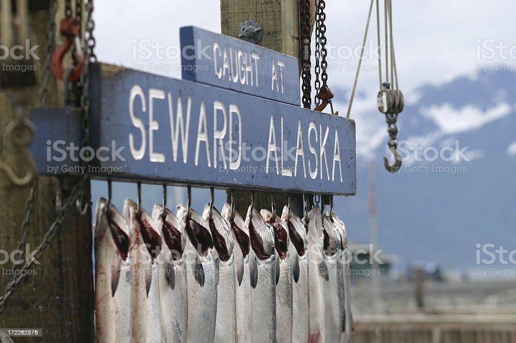 Salmon fishing in Alaska stock photo