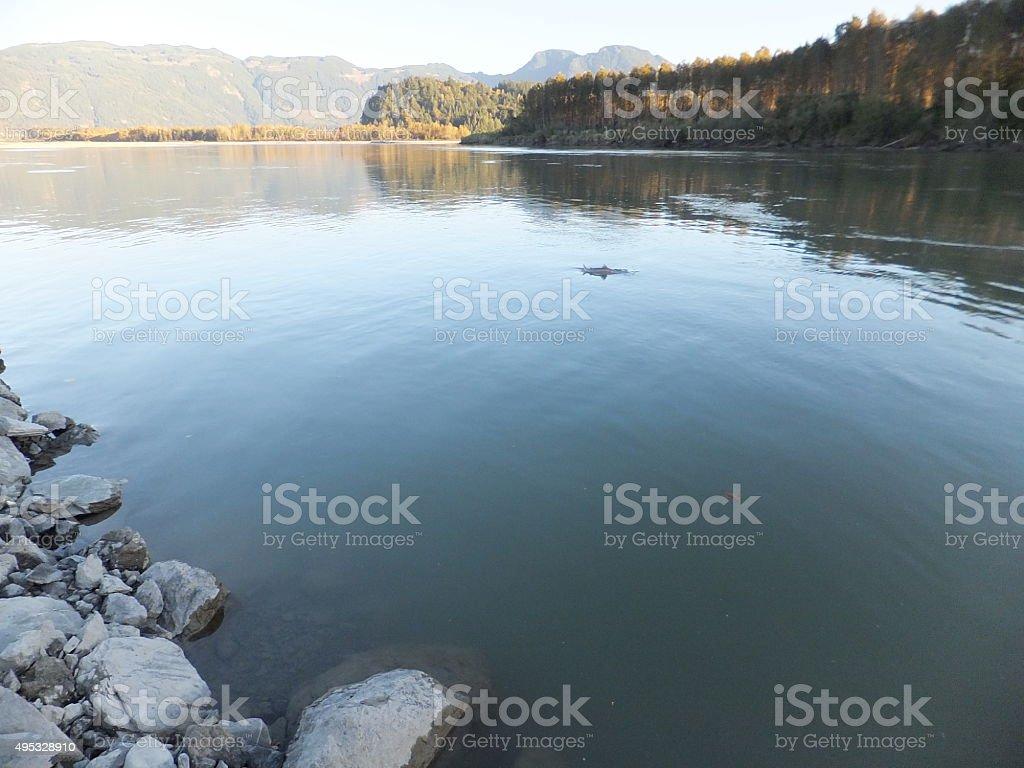 Salmon Fishing stock photo