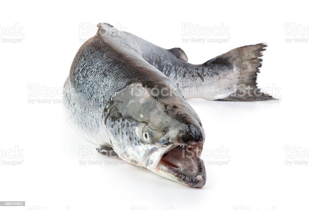 Salmon on the white background stock photo