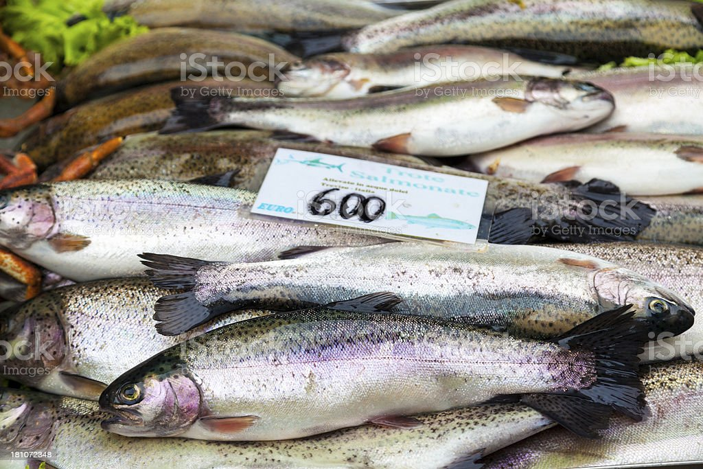 Salmon trout on fish market royalty-free stock photo