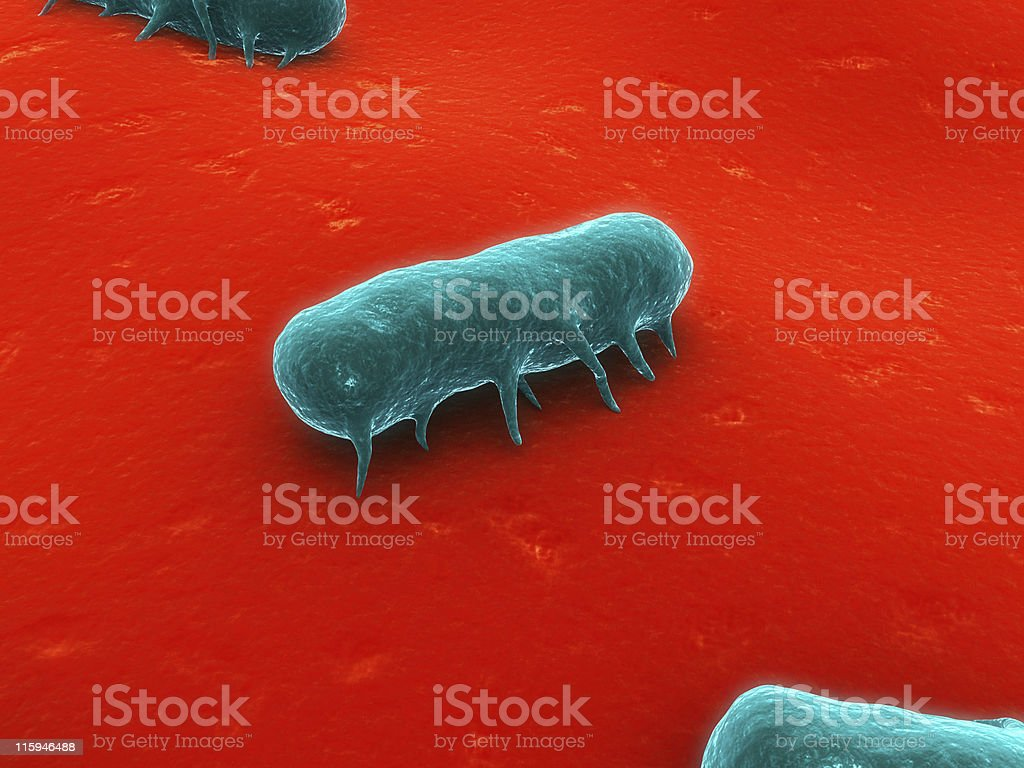 salmonella bacteria stock photo