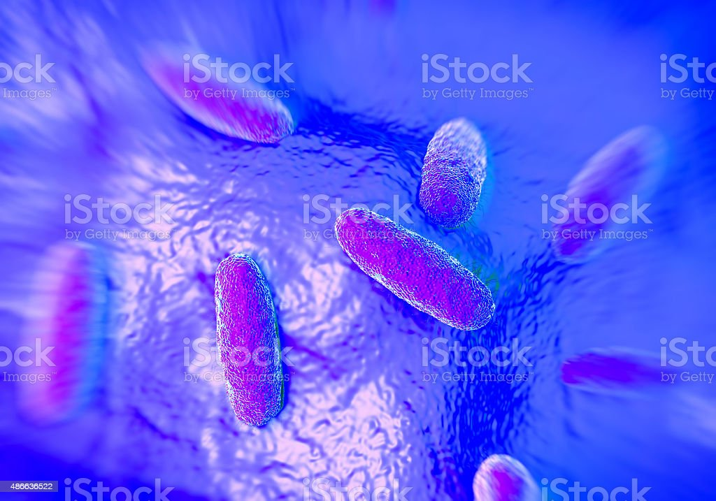 Salmonella typhimurium bacterium stock photo