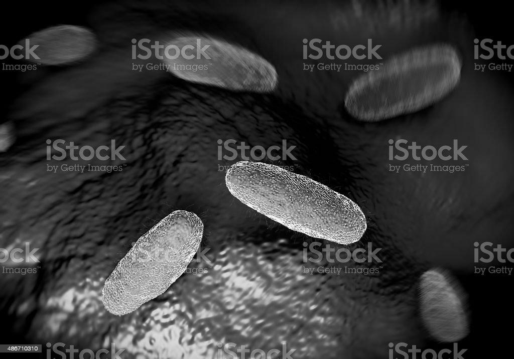 Salmonella typhimurium bacterium stock photo