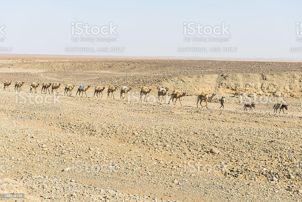 Salt camel train stock photo