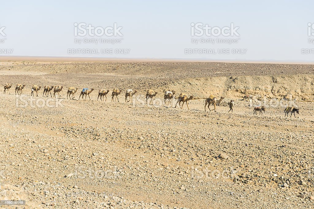 Salt camel train stock photo