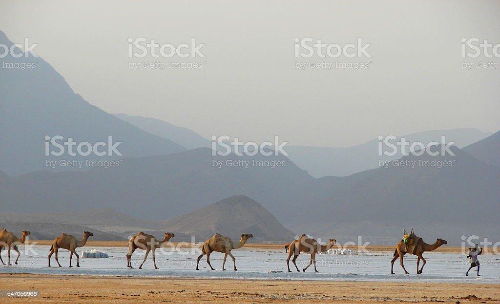 Salt Caravan at Lac Assal, Djibouti, Horn of Africa stock photo