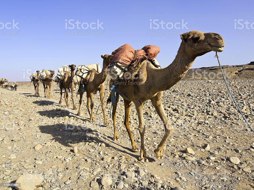 salt caravan stock photo