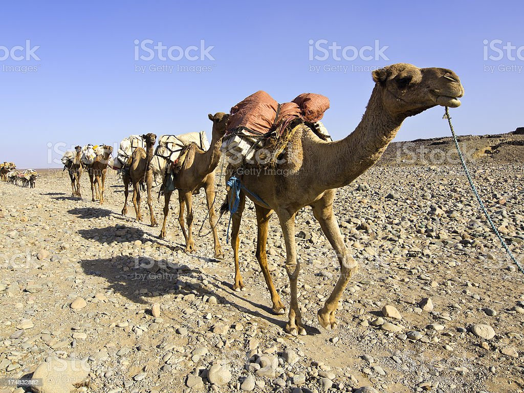 salt caravan stock photo