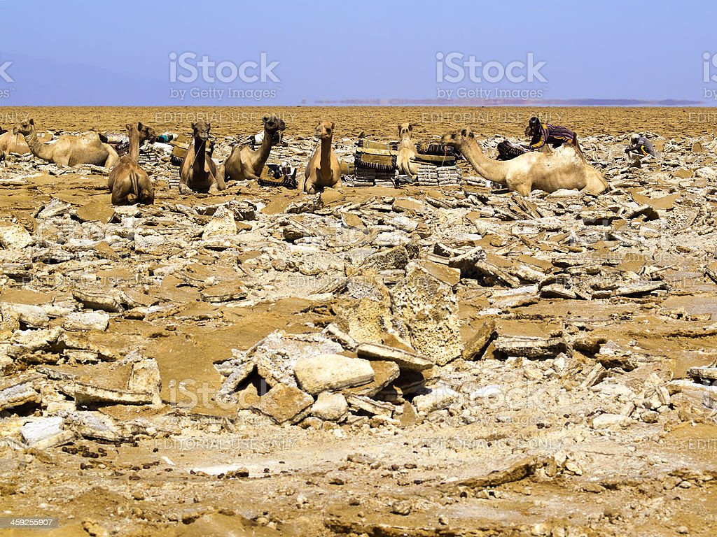 salt colecting stock photo