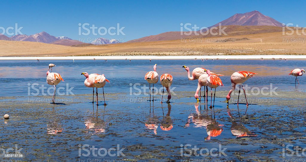 Salt Flats, Bolivia stock photo