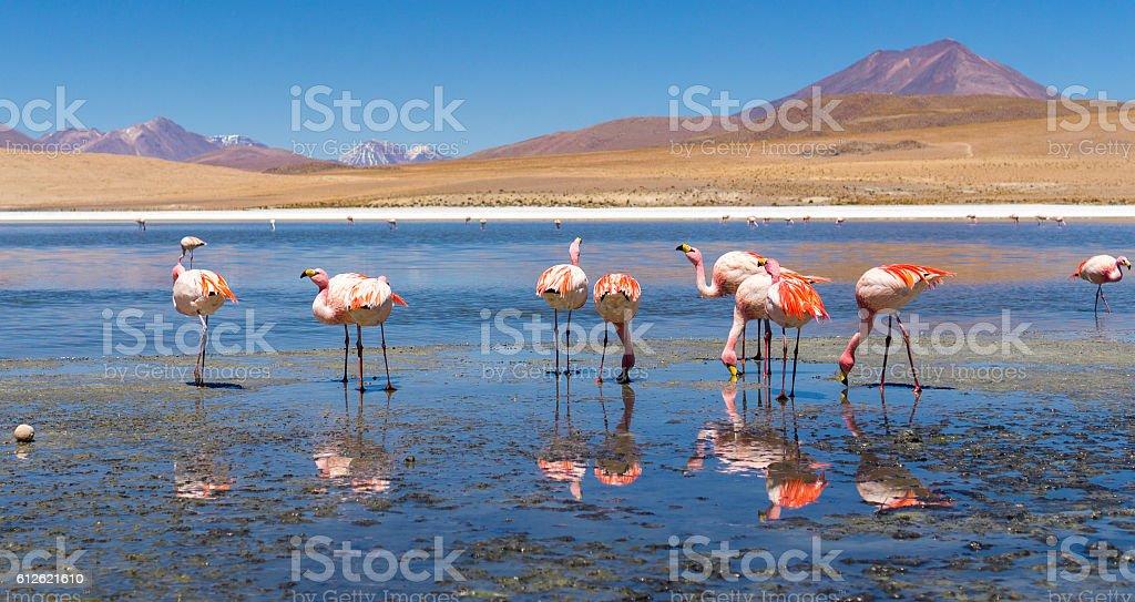 Salt Flats, Bolivia stock photo