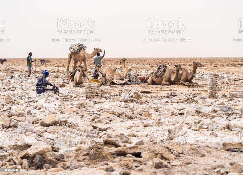 Salt flats in Afar region, Danakil stock photo