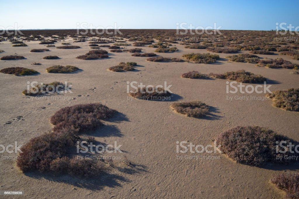 Salt lake and desert in Northern Africa. Djerba island. Tunisia stock photo