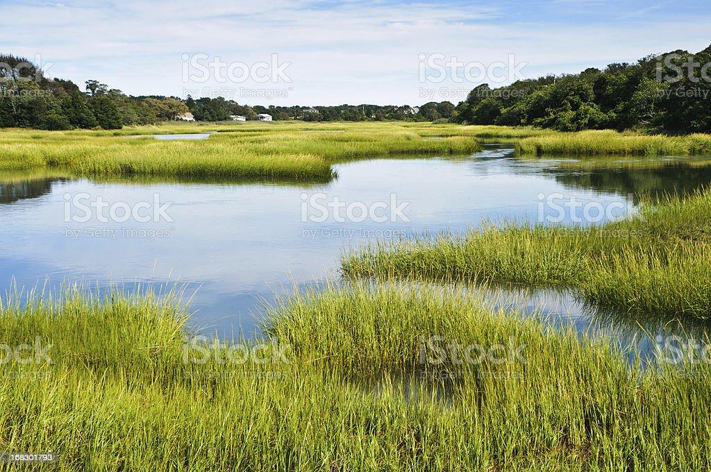 Salt Marsh at Full Tide stock photo
