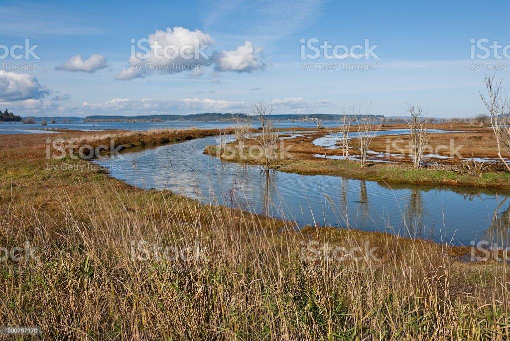 Salt Marsh at Nisqually Refuge stock photo