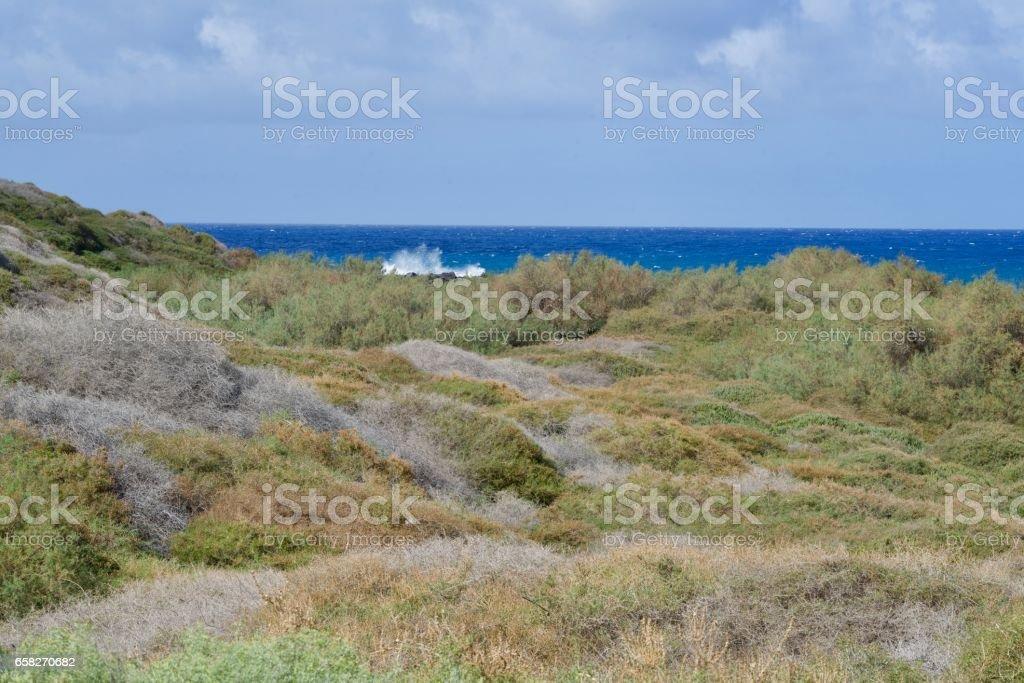 salt marsh of La Gomera stock photo