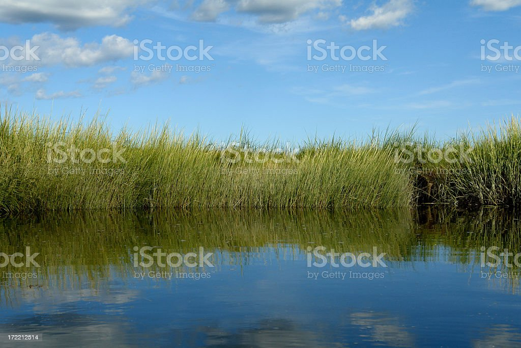 Salt Marsh with grassy riverbank royalty-free stock photo