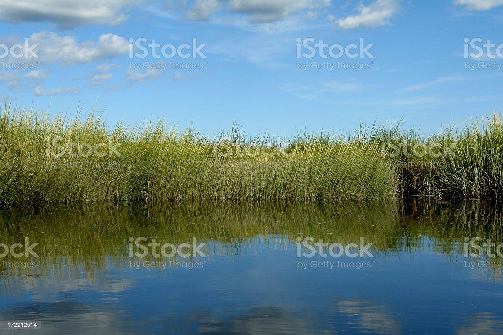 Salt Marsh with grassy riverbank stock photo