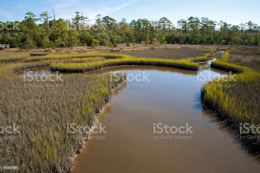 Salt marsh, with meandering streams, North Carolina royalty-free stock photo