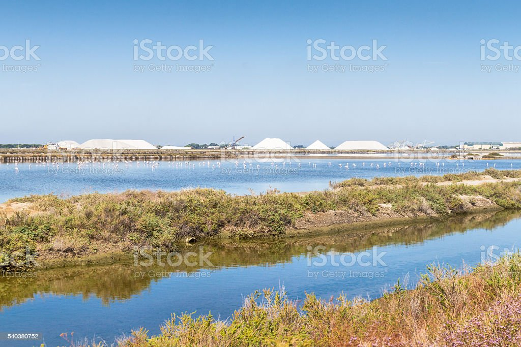 Salt production in a salt flats with pink flamingo stock photo