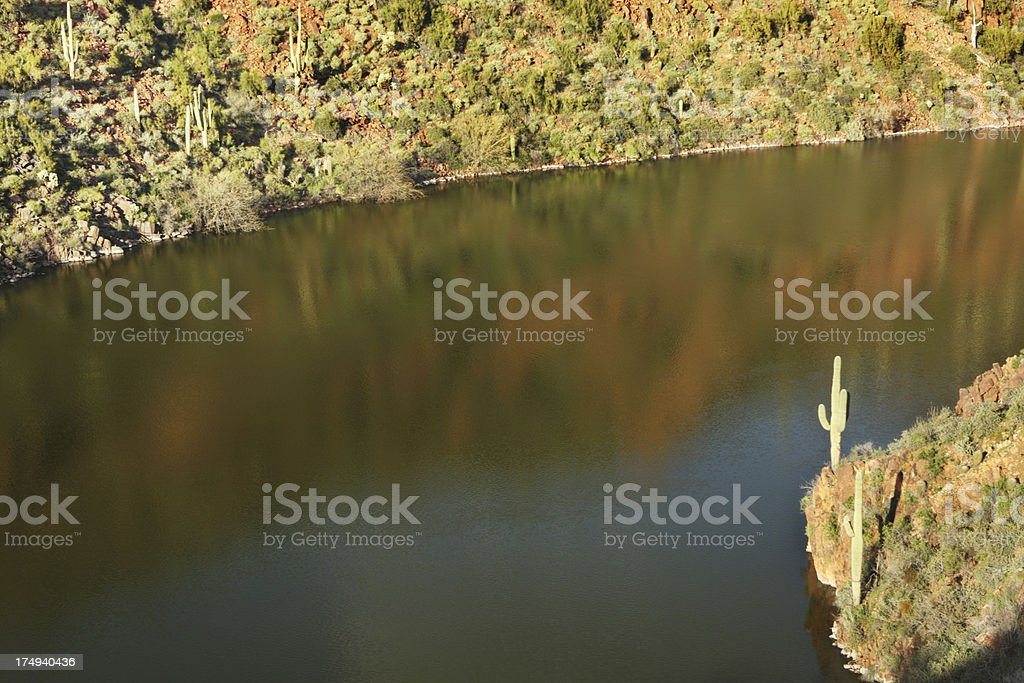 Salt River Desert Cactus Embankments royalty-free stock photo