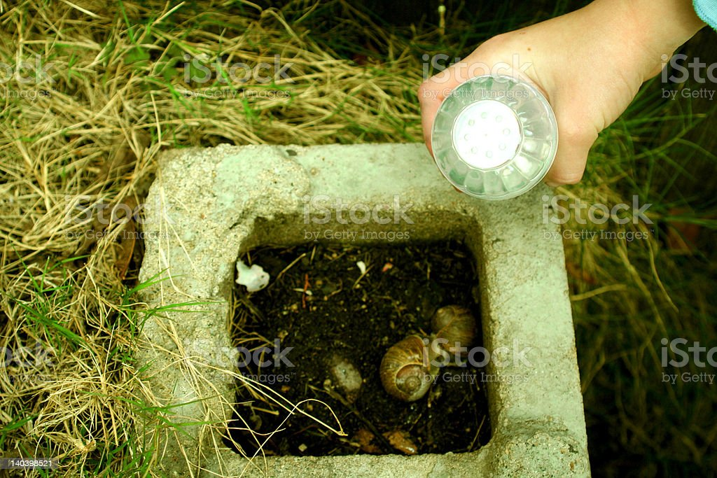 Salt shaker over snails. royalty-free stock photo