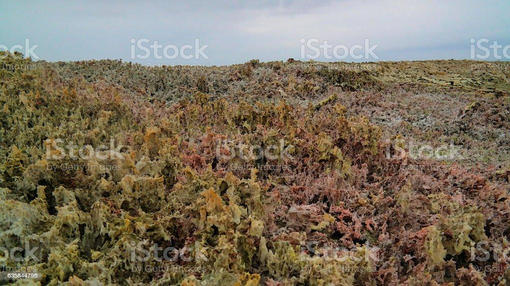 Salt texture inside Dallol volcanic crater Danakil depression, Afar Ethiopia stock photo