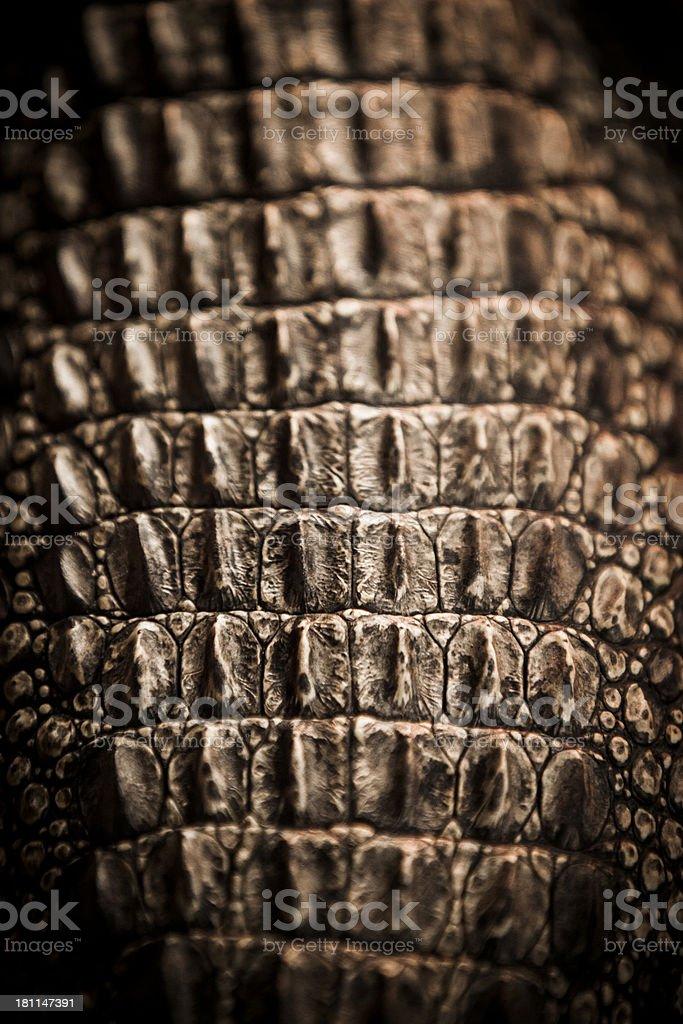 Salt water Crocodile skin royalty-free stock photo