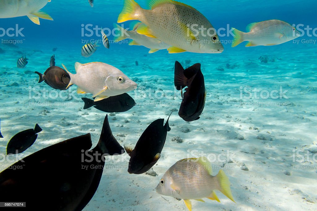Salt water fishes stock photo
