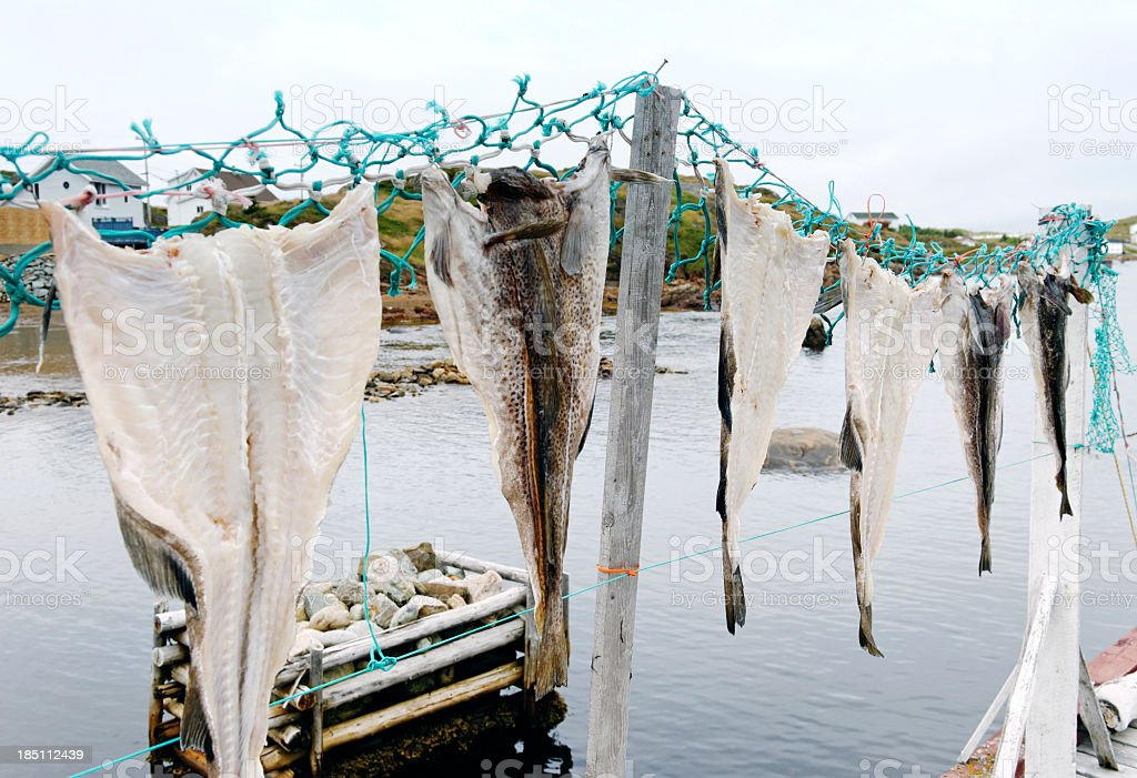 Salted cod is hung out to dry , Twillingate,Newfoundland, Canada. stock photo