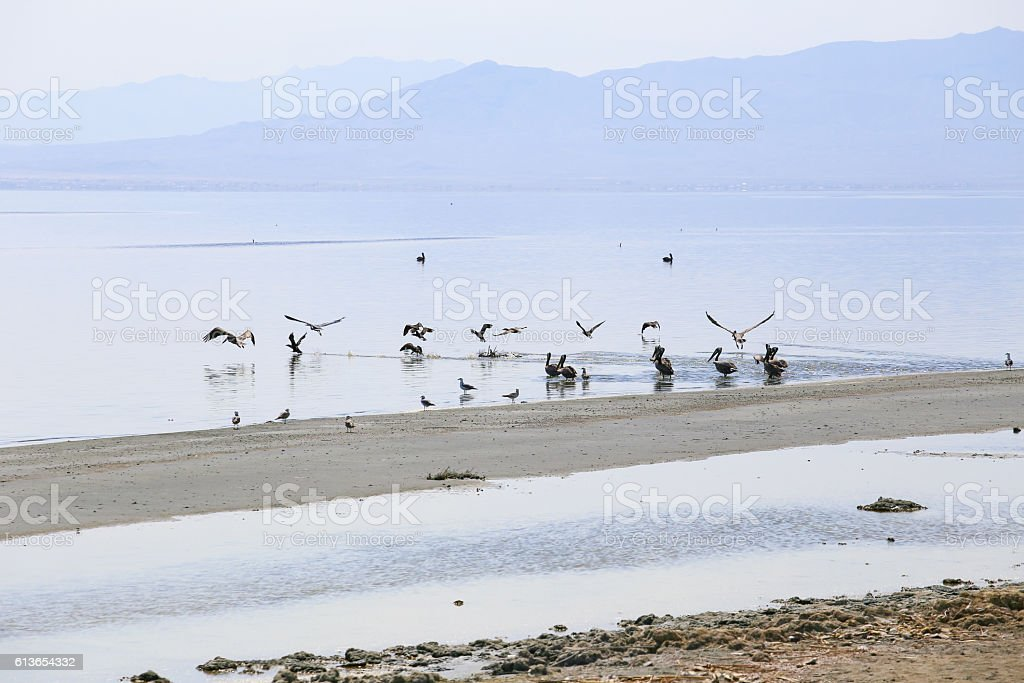 Salton Sea Birds stock photo