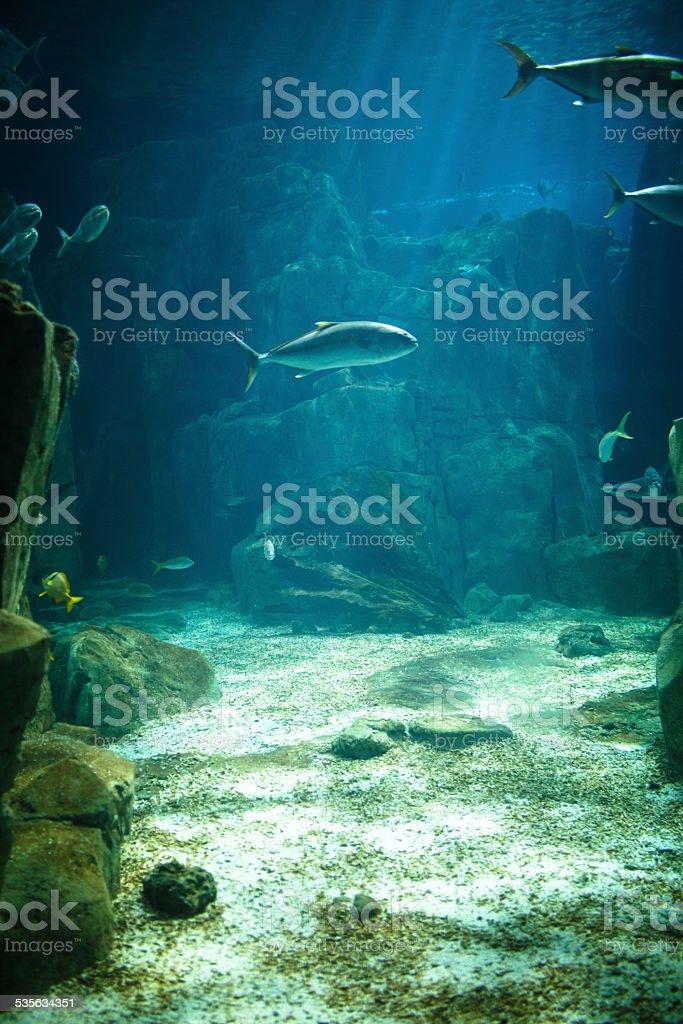 Saltwater aquarium with tropical fish stock photo