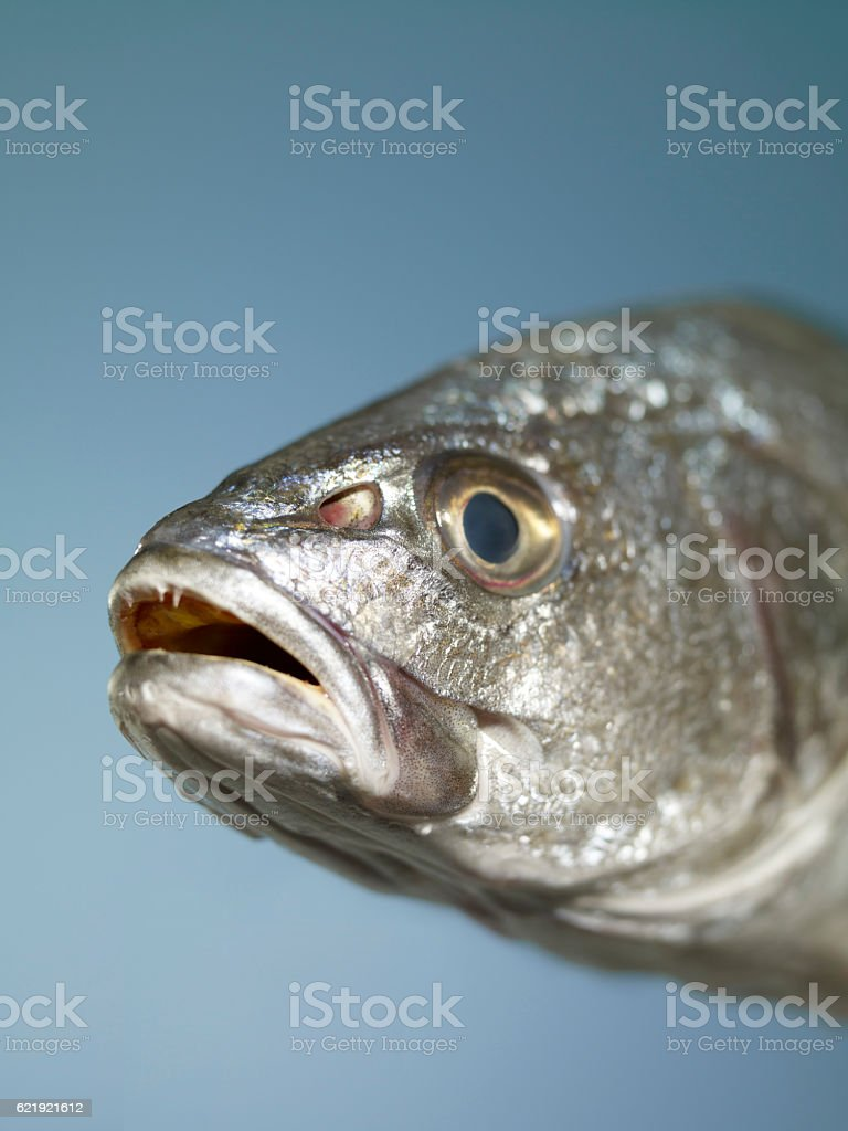 saltwater fish stock photo