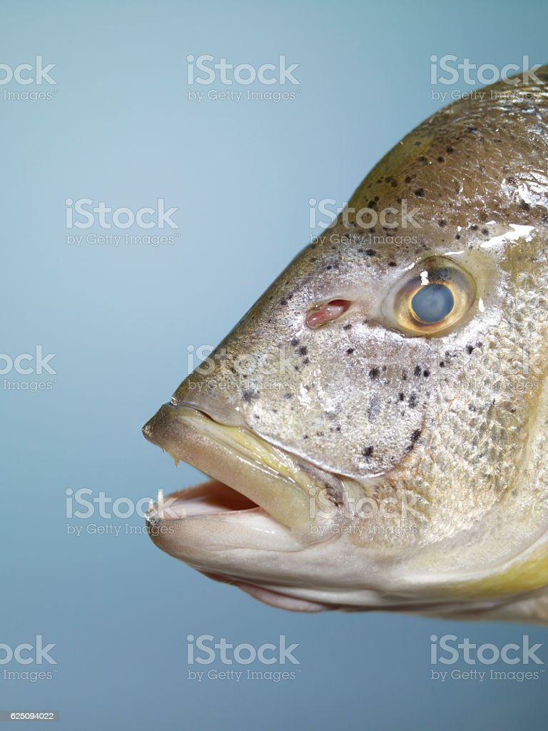 saltwater fish stock photo