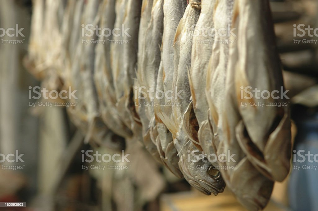 Salty Fishes royalty-free stock photo