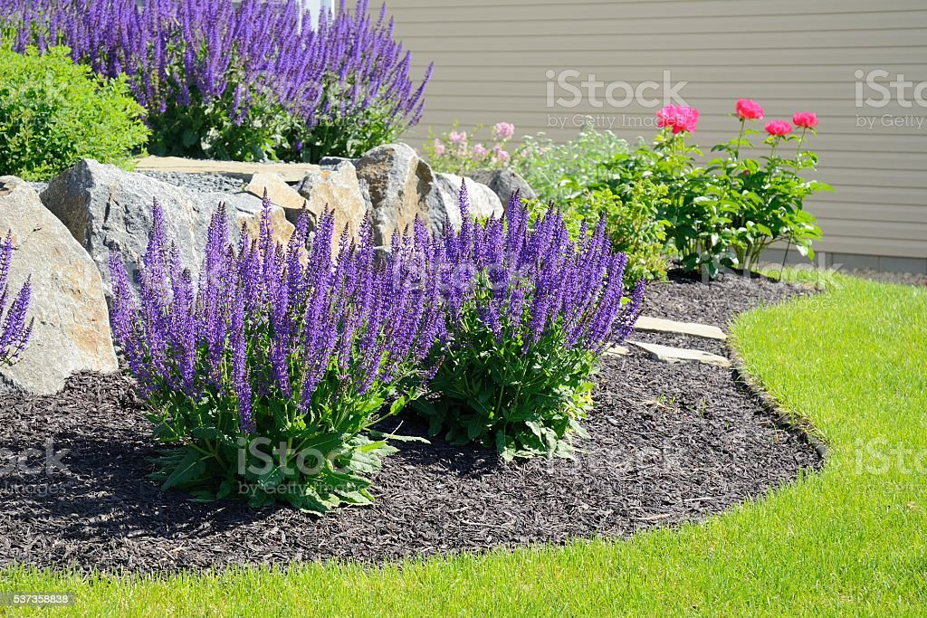 Salvia Flowers and Rock Retaining Wall stock photo