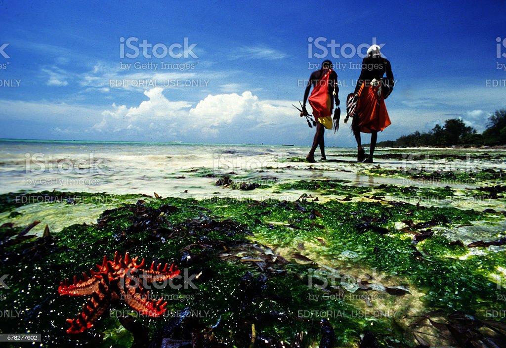 Samburu warriors near a red starfish in Diani beach, Kenya stock photo