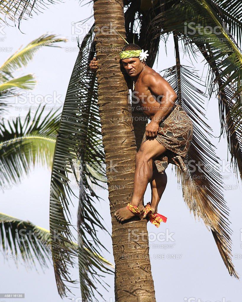 Samoan Palm Climber stock photo
